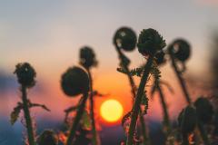 V rytme západu slnka, autor Dušan Strelka